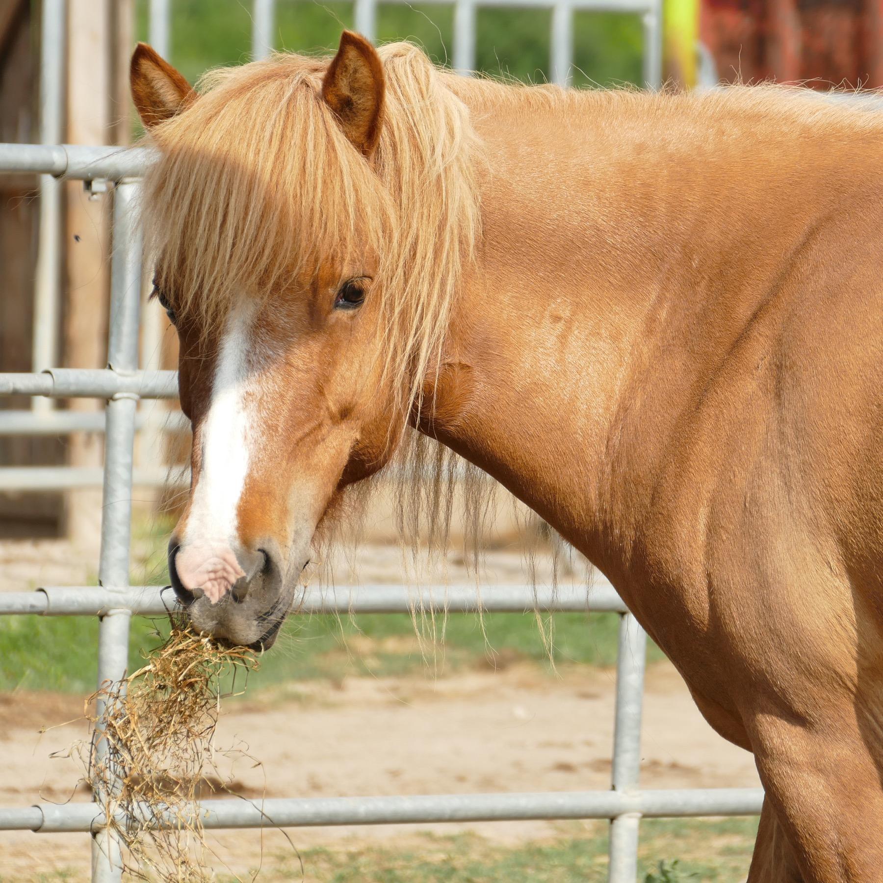 14 Angebot zurück aufs Pferd innen 1 Kopie