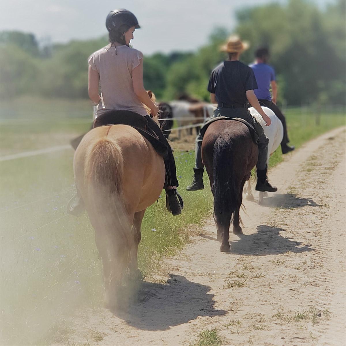 14 Angebot zurück aufs Pferd Header